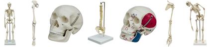 Mini-Skelette & Teile