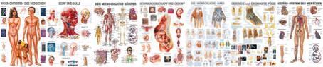 Anatomie allgemein