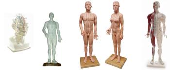 Körper Modelle