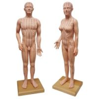 Akupunkturmodell Set Mann & Frau je ca. 70 cm