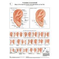 Ohrtafel Spezialpunkte & Meridiane ENGLI SCH / CHINESISCH