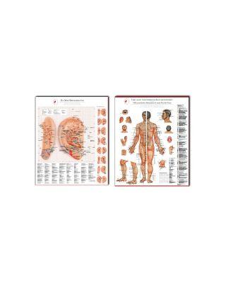 Bundle Ohrakupunktur & Tafel  aller chin. Akupunkturpunkte