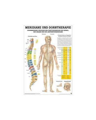 Meridiane & Dorntherapie