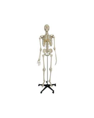 Spezial-Skelett für besonders hohe Beanspruchung