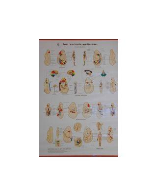 Loci auriculo-medicinae Dr. Bahr (Nicht mehr lieferbar)