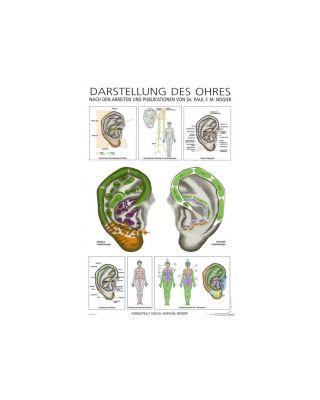 Darstellung des Ohres