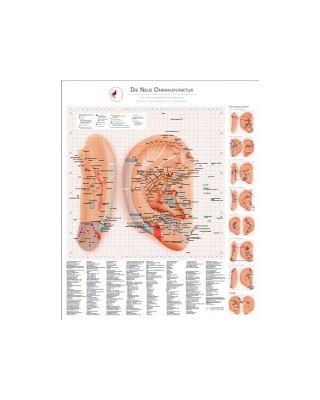 Die Neue Ohrakupunktur - Tafel  von Dr. Bahr