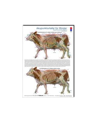 Akupunkturtafel für Rinder