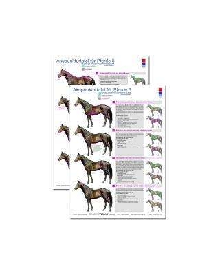 Akupunkturtafel Pferde 5+6