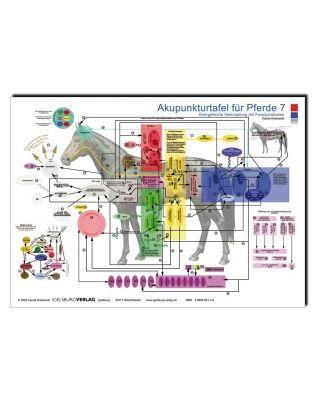 Akupunkturtafel Pferde 7