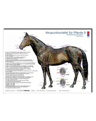 Akupunkturtafel Pferde 8