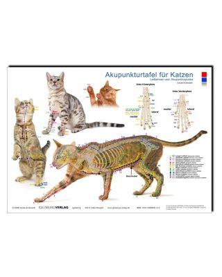 Akupunkturtafel für Katzen