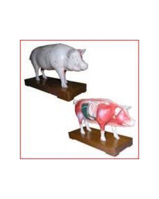 Akupunkturmodell Schwein
